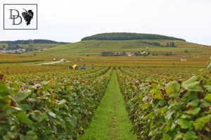 """Vue du bois de Corton depuis la vigne des Chardonnay """"Aux Boutières"""""""